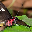 Butterfly lips. by AFogArty