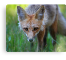 On the Hunt Canvas Print