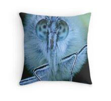 Butterfly Up Close Throw Pillow