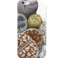 Lithops Cluster (No Labels) iPhone Case/Skin