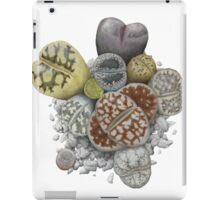 Lithops Cluster (No Labels) iPad Case/Skin