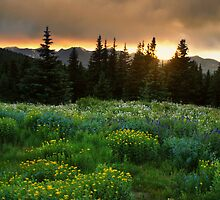A Wildflower Sunset by John  De Bord Photography
