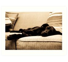 Sleeping dog Art Print