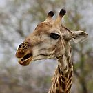 I AM NOT TALKING TO YOU !! by Magriet Meintjes