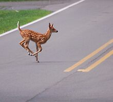 Bambi -  crosses the road  by Michelle BarlondSmith