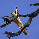 Brown Kite by Bill  Robinson