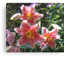 Acapulco Lily Showcase Canvas Print