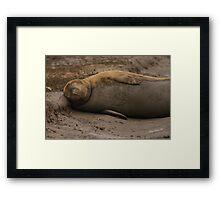 Grey Seal at Donna Nook Framed Print