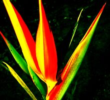 Tropical Paradise by Kylie Van Ingen