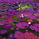 Purple lilypond abstract by Richard Majlinder