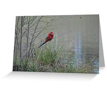 Thorny Snack Greeting Card