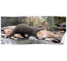 I'm Otter Here Poster