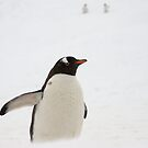 Gentoo Penguin ~ &quot;You Lost Too&quot;  by Robert Elliott