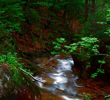 Stream and Green by Abhishek Kanungo