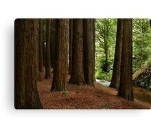 Californian Redwoods, Otway Ranges,Victoria Canvas Print