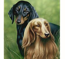 Dachshunds by Colin Howard