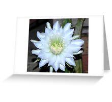 Dragon Fruit Flower Greeting Card