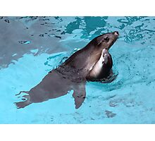 Seal Love Photographic Print