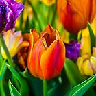 Tulips Enchanting 03 by luckypixel