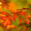Vivid Autumn by HeatherEllis
