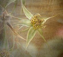 Rust 'n Roses ~ #12 by Rosalie Dale