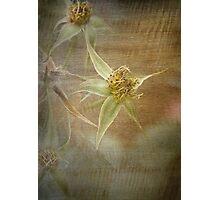Rust 'n Roses ~ #12 Photographic Print