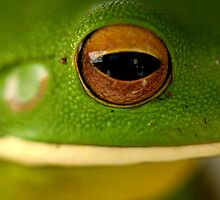 Tree Frog by HeatherEllis