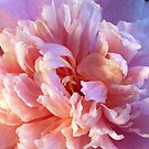 Camellia, pale pink double by Bev Pascoe