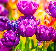 Tulips Enchanting 11 by luckypixel