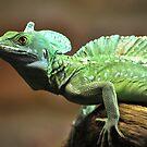 Lizard by lee  adam