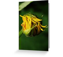 Like snap-beans (from wild flowers collection) Greeting Card