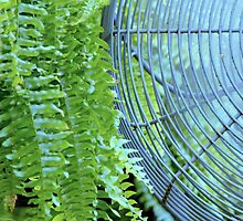 Fern & Fan by Laurie Minor