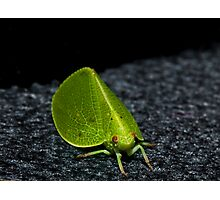 Leaf or Insect ? Photographic Print