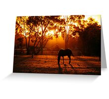 Feeding at Sunset Greeting Card