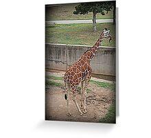 Giraffe/Abilene Zoo Greeting Card