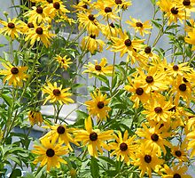 Susans In The High Line by joan warburton