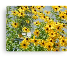 Susans In The High Line Canvas Print
