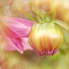 Bulb and Petals by Frankie Lassut