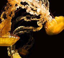 Sea Nettles by Artt