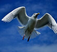 Feathers  & Flying by Barbara Burkhardt