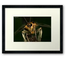 Glowing. Framed Print