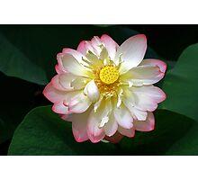 The Last Day Lotus Photographic Print