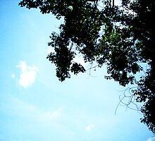 Blue Sky , Green Leaves by Lola758