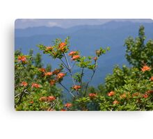 Flame Azalea III Canvas Print