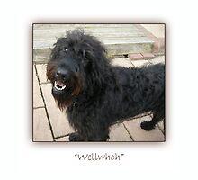 Wellwhoh by Harri