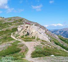 Mount Healy by Dandelion Dilluvio