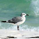 seagull by Sheila McCrea