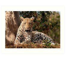 Leopard in waiting Art Print