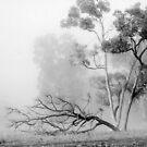 Misty Paddock by Eve Parry