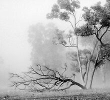 Misty Paddock by Eve Parry